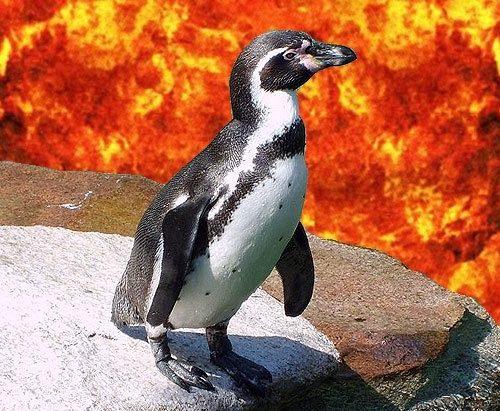 """Was bezweckt Google mit seinem """"Zoo"""" wie Pinguin, Panda ?"""